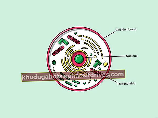 ממברנות תאים: הגדרה, פונקציה, מבנה ותכונות