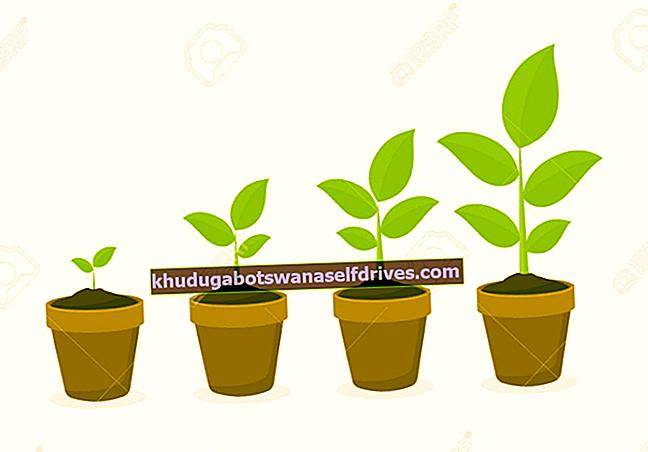 5 vrst rastlinskih omrežij in njihove popolne funkcije ter slike