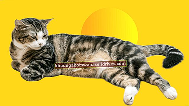 סוגי חתולים והדרך הנכונה ללטף חתול (על פי מדע)