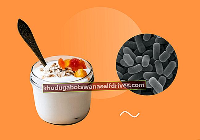 תפקיד החיידקים שמאחורי הכנת היוגורט