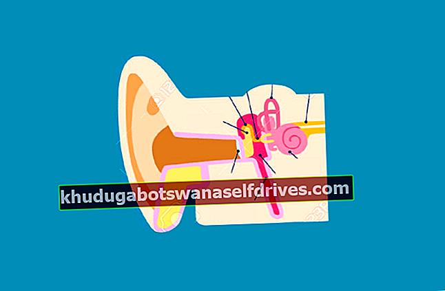Deler av øret sammen med bilder og forklaring av funksjonen