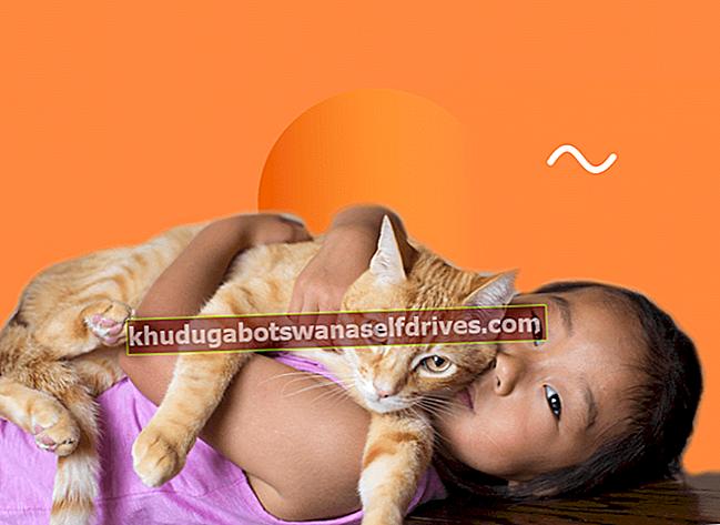 החזקת חתול הופכת אותו לעקרות, האם זה נכון? (תשובות ועצות לאלו מכם שאוהבים חתולים, אבל חוששים להיות פוריים!)