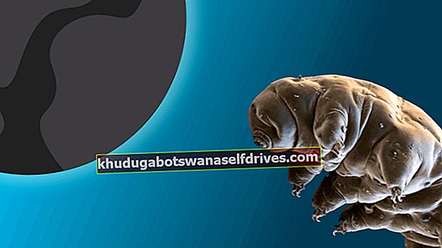 מה זה tardigrade? מדוע הגעת לירח?