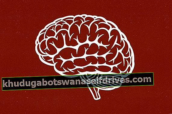 6 Osnovne informacije o možganih