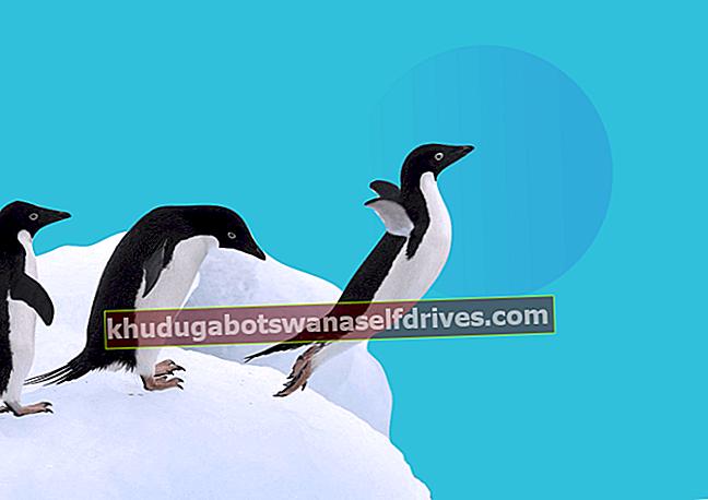 Zakaj pingvini ne morejo leteti, ko so ptice?