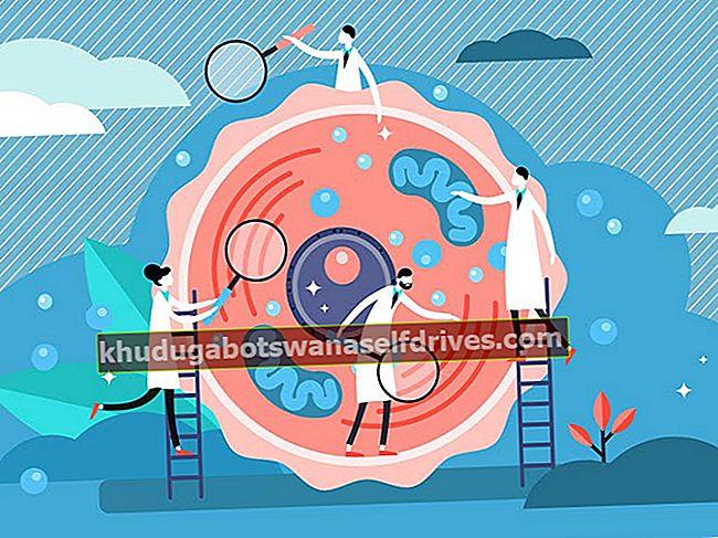 ההבדל בין מיטוזה למיוזה - חלוקת תאים