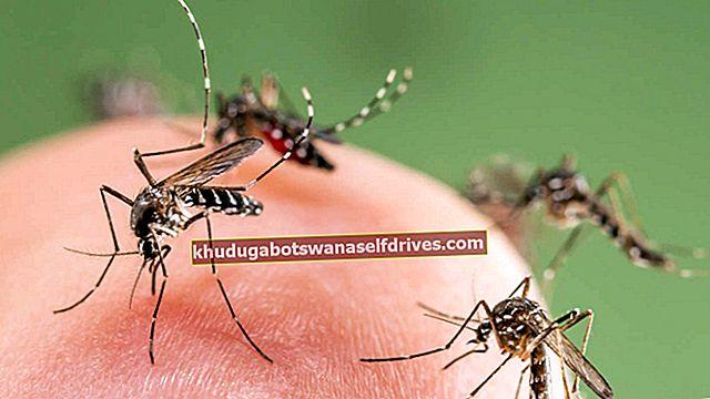מדוע יתושים אוהבים להרגיז אותנו?
