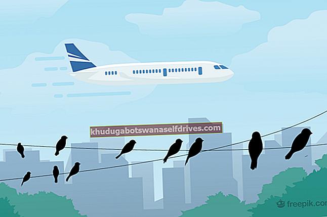 איך ציפורים מעוררות השראה למטוסים