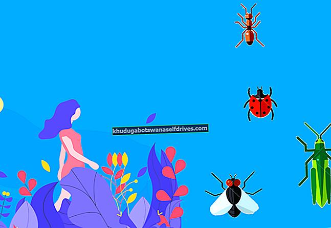 Mogoče je, da bodo ljudje uničeni, če bodo žuželke izumrle