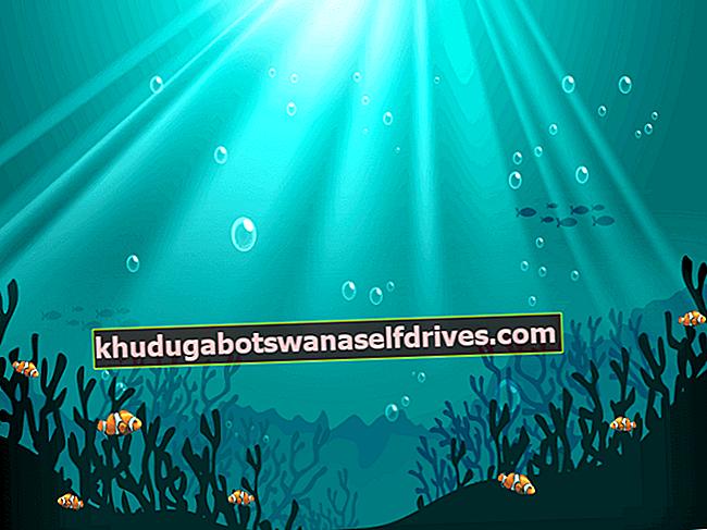 Razmnoževanje rib klovnov ogroža svetlobno onesnaženje