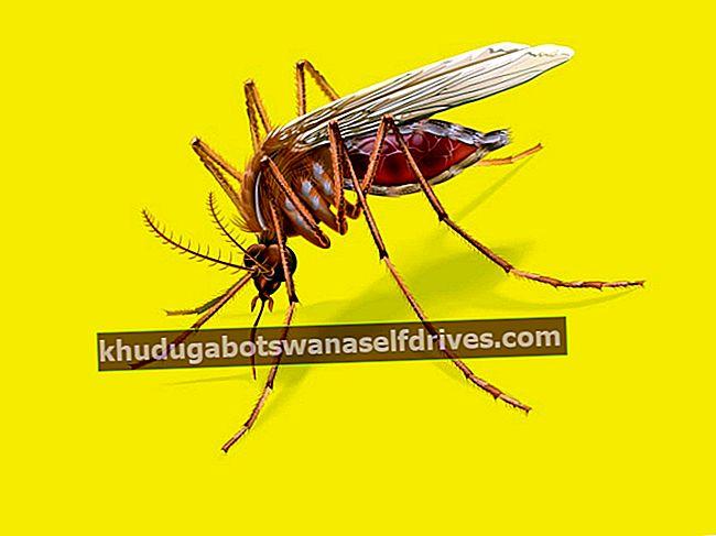 Zakaj piki komarjev otečejo in srbijo?